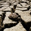Susza dotyka rozległe obszary Chin