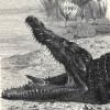 Chiny same o sobie, my i ptak w krokodylej paszczy