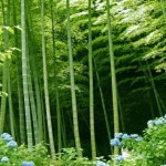 bamboo-forestMOD