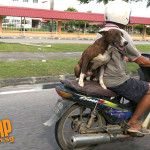 dog and moto