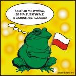 frog yellow